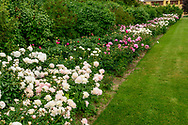 Peonies, Three Ponds Farm, 939 Scuttle Hole Rd, Water Mill, Long Island, New York