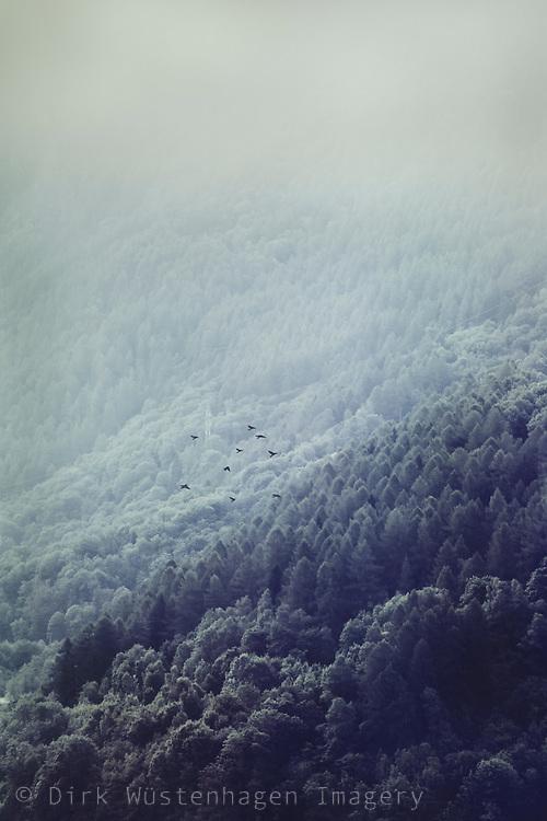 Bewaldete Berghänge in Morgenlicht bei nebel, Chiesa in Valmalemco, Lombardei,Italien