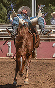 Bareback rider R.C. Landingham from Hat Creek, California scores 64.0 at the 62nd annual Mother Lode Round-up on Sunday, May 12, 2019 in Sonora, California.  Photo by Al Golub