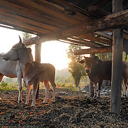 This location is of a farm located in the jungle. Nukul finds this place beautiful. She appreciates that the farm animals are allowed to stay together.