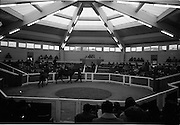 15/11/1965<br /> 11/15/1965<br /> 15 November 1965<br /> Goffs November Bloodstock Sales at the RDS Sale Paddocks, Ballsbridge, Dublin. Picture shows a general view of the Sales Paddock.