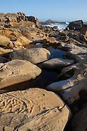 Tidepools adorn sculpted sandstone headlands, Salt Point State Park, California