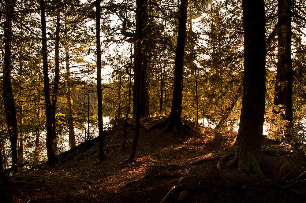 Dawn in the woods of Craig Lake State Park in Michigan's Upper Peninsula.
