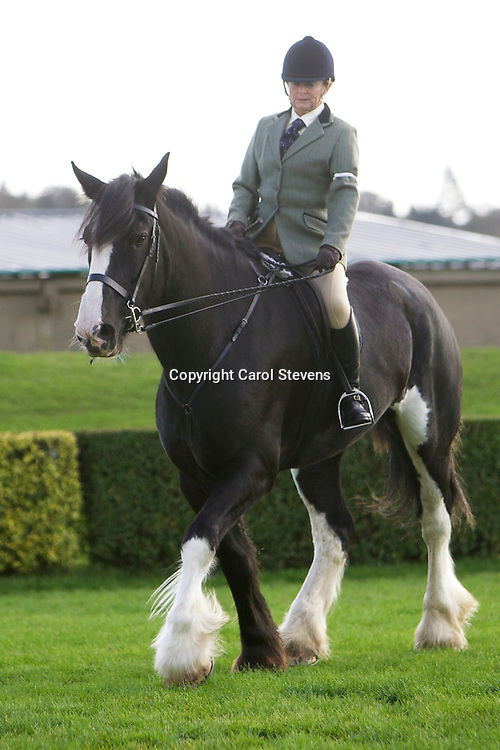 Mrs Debbie Eastwood riding her own 7 year old black mare Shire Horse Metheringham Upton Liberty