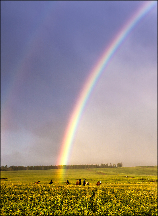 Horses and rainbows in open field. Maunaloa, Molokai, Hawaii