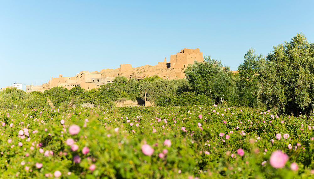 Derelict Moroccan kasbah architecture nearby to the rose fields inside the 'valley of roses,' Kelaat M'Gouna, Southern Morocco 2016-05-13.<br /> <br /> This main road through the Dades Valley is known as being the 'road of a thousand kasbahs,' stretching from Ouarzazate to Tinghir, curving it's way through gorges and stunning arid landscapes which are naturally eroded by the winds from the Sahara desert. <br /> <br /> The region offers stunning trekking, hiking, driving and cyclying routes throughout the gorge, oasis palmeries which are built alongside the Oued Dades (Dades river) and the crumbling derelict kasbahs.