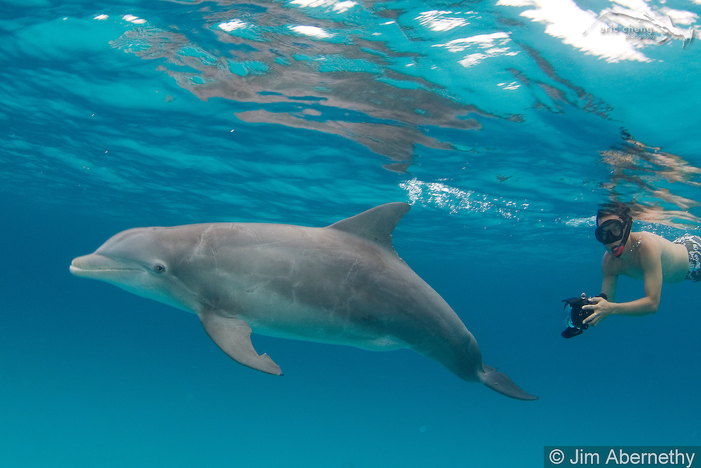 Eric Cheng photographs dolphins in the Bahamas