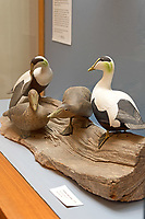 """Common Eider group, 1970."" Bird carving by Wendell Gilley"