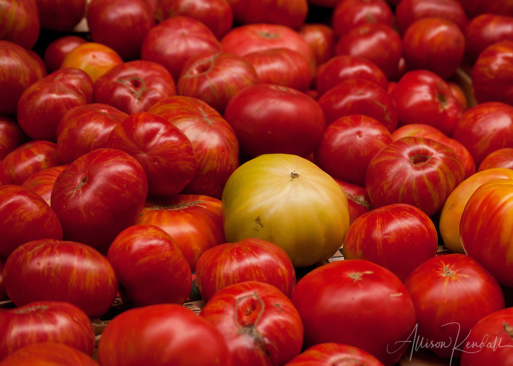 Summer tomato season in full heirloom shades of red, orange and yellow.