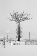 Japan   Winter Monotone