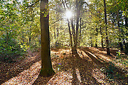 Nederland, Nijmegen, 2-11-2014Dit weekeind waren het een prachtige herfstdagen. Op zaterdag werd het weerrecord voor de wamste dag van november gebroken sinds de metingen startten in 1846.FOTO: FLIP FRANSSEN/ HOLLANDSE HOOGTE