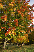 Autumn tree with yellow,red,orange leaves