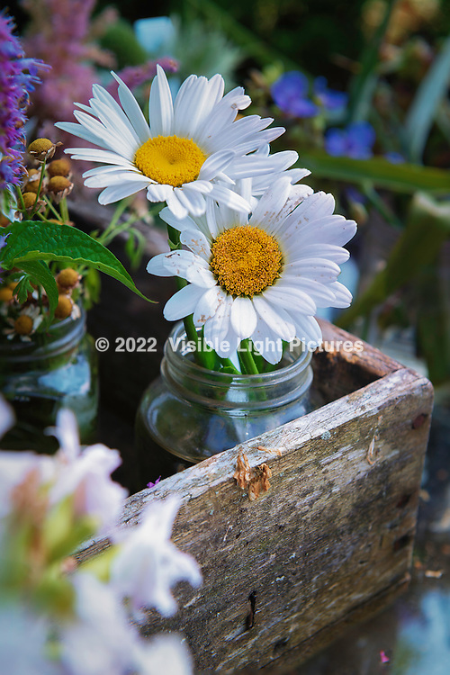 Two daisies in a jar on a table.