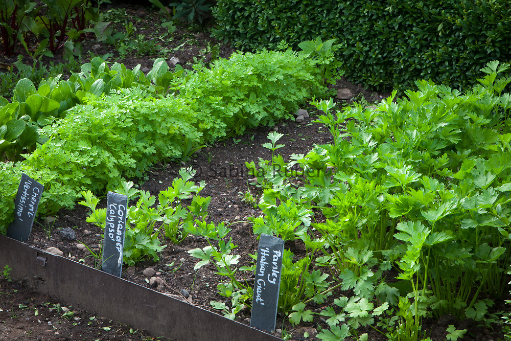 Cut Flower Garden - rows of herbs