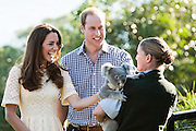 Duke and Duchess of Cambridge visit Taronga Zoo, Sydney , Australia. Catherine, Duchess of Cambridge and Prince William, Duke of Cambridge meet a Koala, 20 April 2014