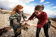 2 women popping seaweed, smelling seaweed, on pebble beach