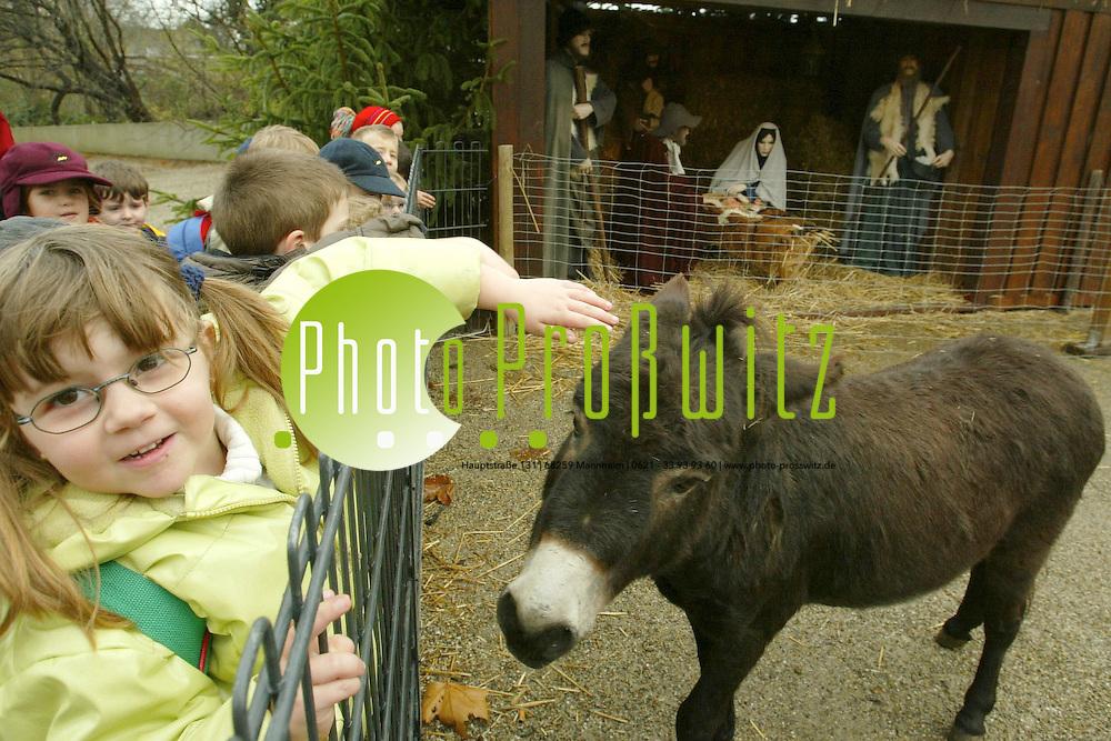 Mannheim.  Luisenpark. Kinder des Waldkindergartens St. Hildegard besuchen desn Esel der &quot;lebendigen Krippe&quot;<br /> <br /> Bild: Pro&szlig;witz