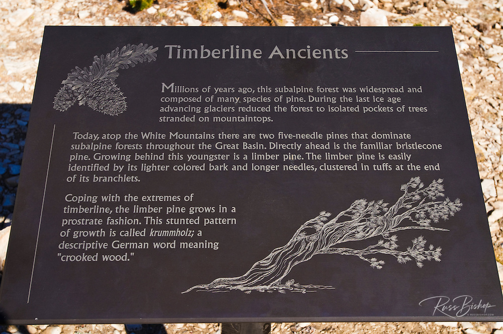 Interpretive sign at the Patriarch Grove, Ancient Bristlecone Pine Forest, Inyo National Forest, White Mountains, California