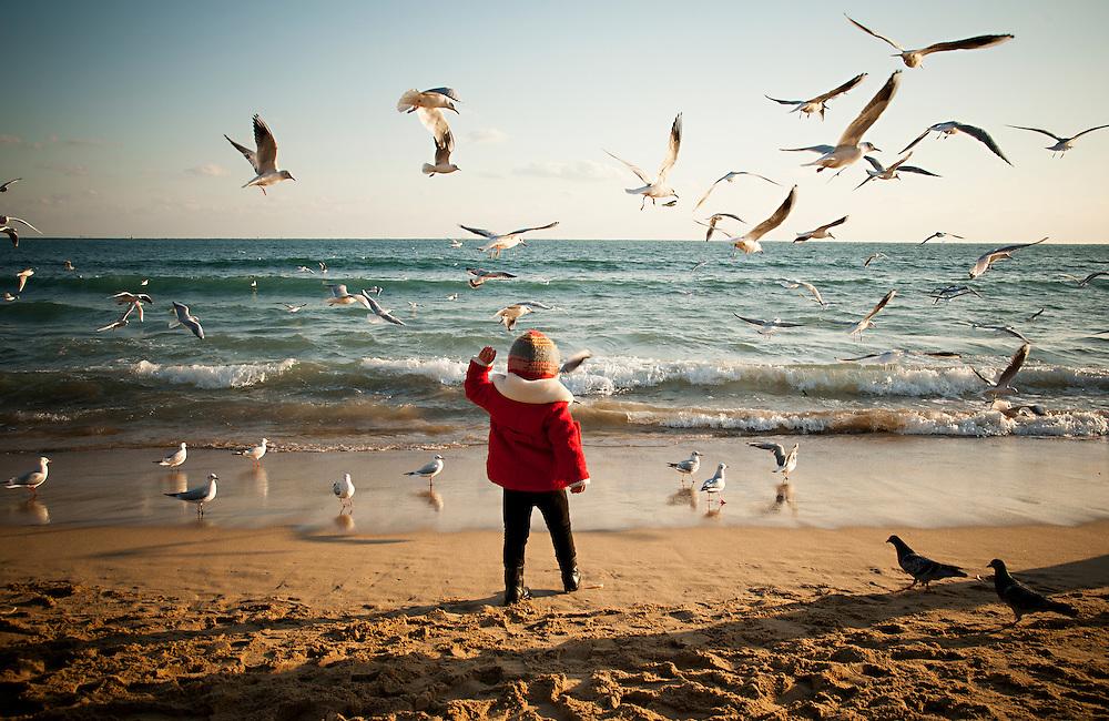 Seagulls flock as a child throws food to them on Haeundae Beach, Busan, South Korea, December 31, 2012.