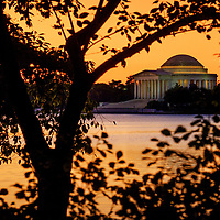The Jefferson Memorial is seen through the trees along the Tidal Basin.