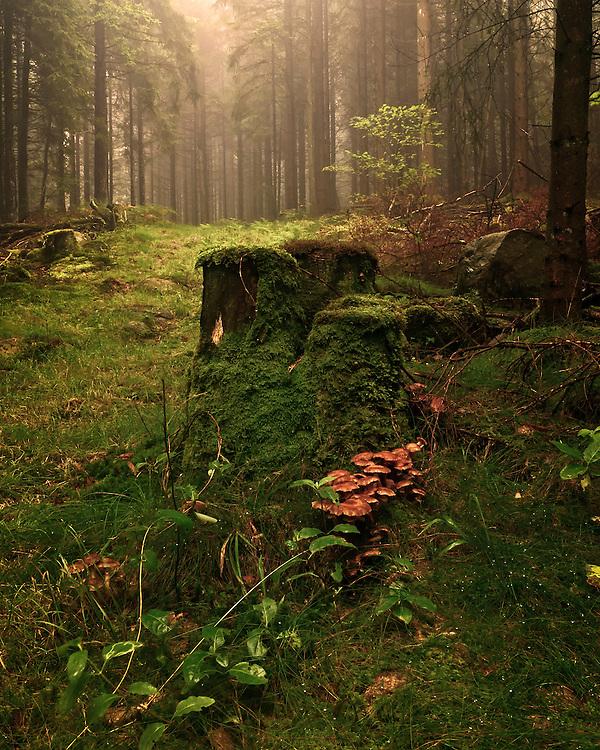 Woodland scene from Suvavatnet, Vest-Agder, Norway.