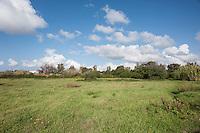 La Salina dei Monaci, sono un ottimo luogo per praticare il birdwatching. è zona di sosta dei fenicotteri rosa (Phoenicopterus roseus) durante le fasi di migrazione. Altri uccelli migratori frequentano la zona come i germani reali, gli storni, le gru, i cigni e le oche selvatiche. Presente anche il poco comune cavaliere d'italia. Uccelli tipici della zona sono anche l'airone rosso e l'airone bianco, l'avvoltoio capovaccaio, il picchio, il pettirosso, il martin pescatore, la capinera, lo scricciolo, l'usignolo, la gazza, il corvo ed il merlo. Molto ampia la gamma di specie di anfibi come la raganella italiana, il rospo comune, e il tritone italico. I rettili più comuni invece sono la tartaruga di terra e d'acqua dolce, la vipera di Laemann, la biscia dal collare, il biacco, il cervone e il colubro leopardino. I mammiferi sono anch'essi molto numerosi, soprattutto animali adattabili come lo scoiattolo, il topo quercino e il topo campestre. Molto frequente il riccio, e la più grande istrice, oltre a lepri, conigli selvatici, gatti selvatici, volpi, tassi, faine e cinghiali. Molto numerosi sono anche le specie di uccelli rapaci come il barbagianni, la civetta e il gufo comune, che agiscono di notte, e la poiana, il falco pescatore, l'albanella, il nibbio bruno, il biancone, il falcone pellegrino e il gheppio.