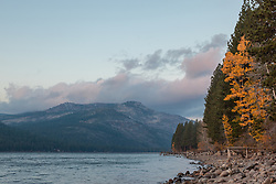 """Donner Lake Morning 6"" - Photograph of a yellow leaved Cottonwood tree along the shore of Donner Lake in Truckee, California."