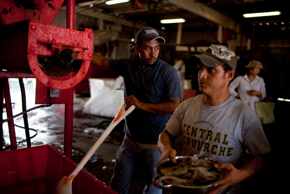 After waiting for hours  dockworkers Wilmer Mancia, 34 left, and Noel Del Angel, 35 right, ice down shrimp at Dean Blanchard Seafood, Inc. in Grand Isle, LA on June 24, 2010 where a fishing ban has been put in place due to the B.P. oil spill. The seafood company once was working 24 hours a day and seven days a week during shrimping season, but has reduced operating hours and mostly sells gas and ice now. The company also laid off almost 80 workers according to owner, Dean Blanchard.