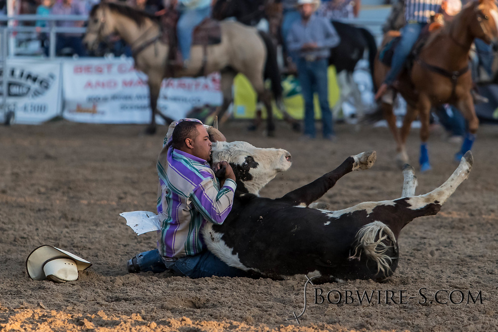 Steer wrestler Travis Booth makes his run during the second performance of the Elizabeth Stampede on Saturday, June 2, 2018.