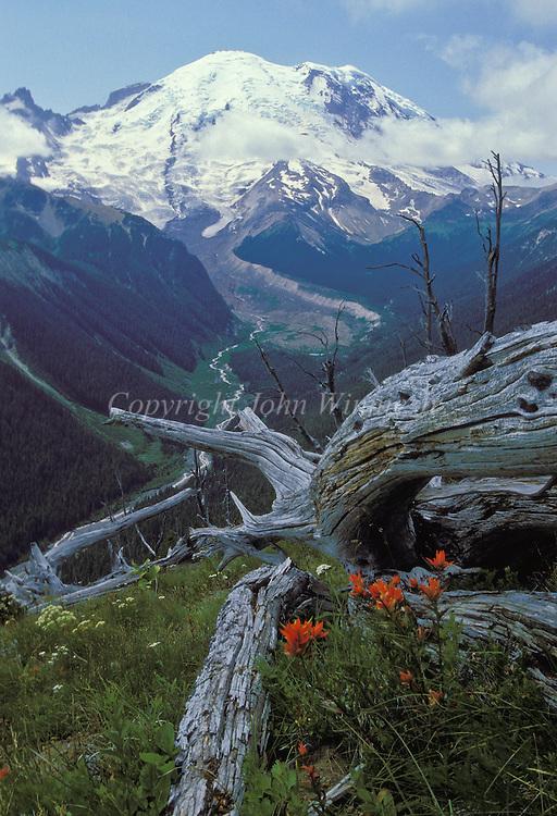 Mount Rainier and indian paintbrush. Mount Rainier National Park, Washington.