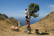 "Boys taking care of a bougainvillaea tree. With a mild climate, the smaller of Cape Verde islands has the nickname of ""flower island""."