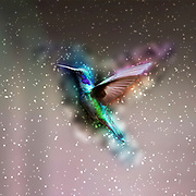 Digitally enhanced image a hovering hummingbird