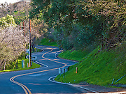 Long and Winding Road, Newly Repaved, Trees, Yellow double line divider