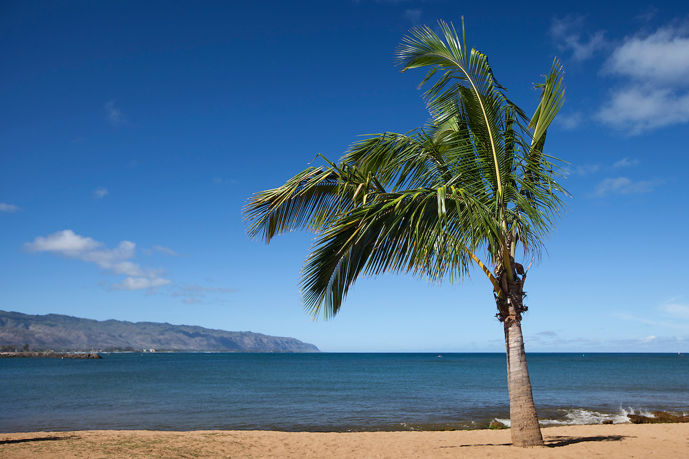 Palm tree on the beach on Oahu's north shore, Hawaii