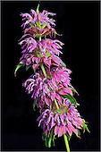 Floral Portfolio IV