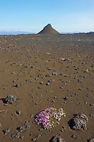 Islande, centre de l ile, payasge volcanique dans la region de Askja // Iceland, centre of island, volcanic landscape around Askja