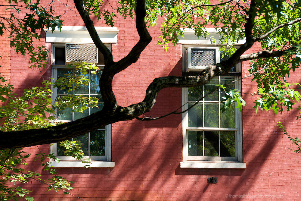 White windows contrast with the red brickwork on this down town building in NYc, and a beautiful curved branch of a tree frames the picture