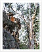 An example of the captivating trees and granite boulders typical of Kwiambal National Park, captured near the Lemon Tree Flat campground [Kwiambal NP, NSW]<br />