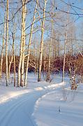 Cross-country ski trail near Lake Superior. Ironwood Michigan USA