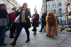 EDITORIAL USE ONLY An ultra-realistic animatronic Orangutan appears at Oxford Circus in London to highlight the threat to the survival of the species due to deforestation caused by palm-oil production, following Iceland's Christmas advert being banned.