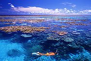 Young female snorkeler swims over beautiful corals that come up to the surface of the water, Marshall Islands / Majuro Atoll