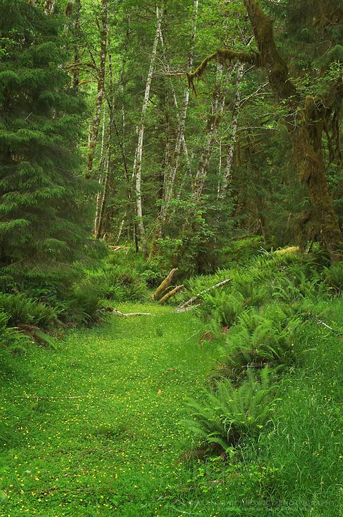 Hoh Rain Forest Olympic National Park