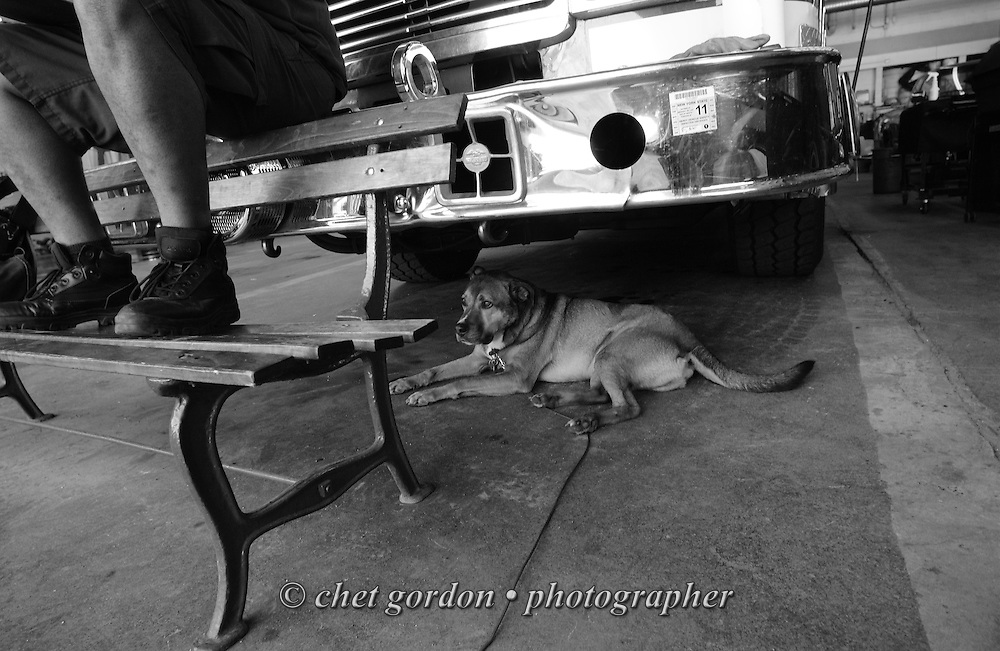 """Barney"" the Newburgh Fire Dept. mascot dog rests under a ladder truck parked in the firehouse in Newburgh, NY on Tuesday morning, July 5, 2011.  © www.chetgordon.com/blog"