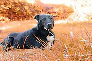 Cody (November 1997- April 19, 2011)
