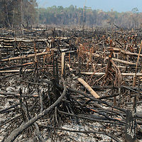 Slash-and-burn is a common forest clearing practice in Borneo. This forest was intentionally burned during a severe drought season.