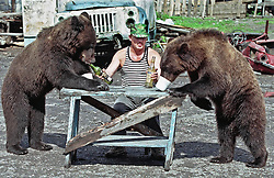 MOS02-20010903-MARIINSK, RUSSIAN FEDERATION: Businessman Nikolai Kirpichnikov gives medovukha (self made alcohole drink based on honey) to his bears (bears like this drink very much and they receive it time to time) in the yard of his house in the town of Mariinsk in Kemerovo region (eastern Siberia), Saturday, 01 September 2001. Nikolay Kirpichnikov found three bear cubs four years ago in the forest when their mother was killed by a poachers. Untill now all three bears live in his house ian iron cage.