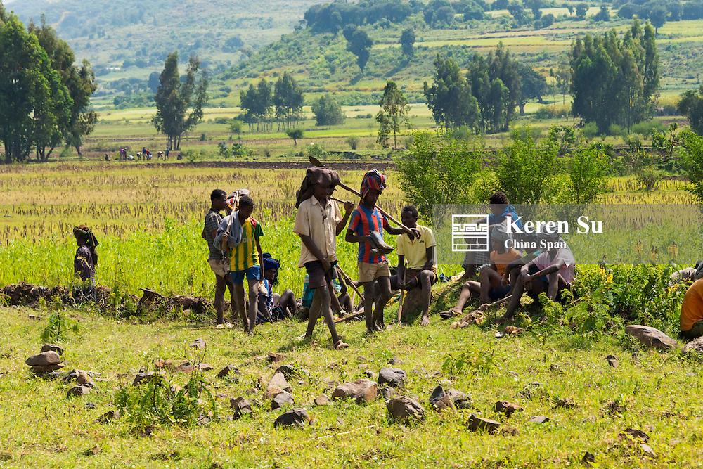 Farmers working in teff field, Bahir Dar, Ethiopia