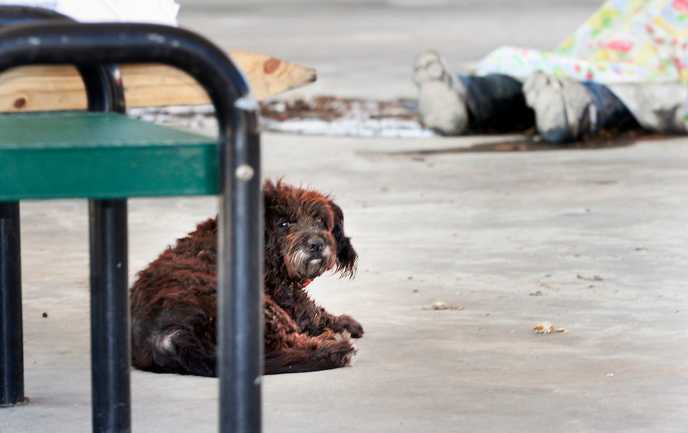 A dog lies near a dead body at a gas station in New Orleans. The man was reportedly shot during a dispute over gasoline several days prior as Oregon National Guard troops work in New Orleans after the wrath of Hurricane Katrina. Photographed September 7, 2005. (Thomas Patterson / Statesman Journal)