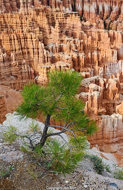 ,Bryce Canyon National Park Elevation 8100, Utah.