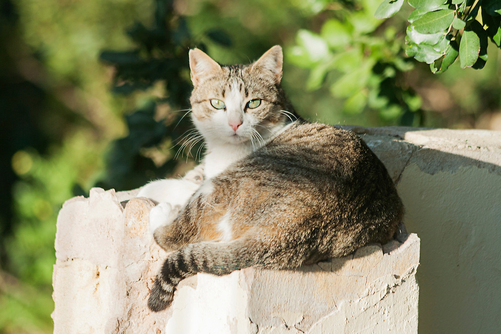 A cat lying on a wall in the sunshine